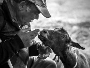 葡萄牙牧羊人的生活07