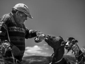 葡萄牙牧羊人的生活