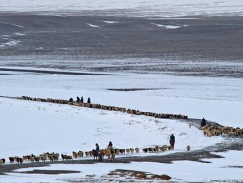 中国哈萨克族牧民的冬牧场生活10