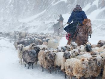 中国哈萨克族牧民的冬牧场生活13