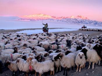 中国哈萨克族牧民的冬牧场生活14