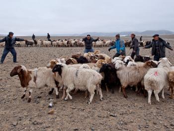 中国哈萨克族牧民的冬牧场生活05