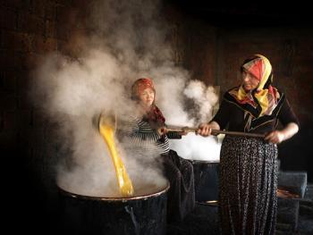 土耳其熬甜菜糖