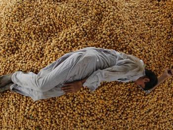 巴基斯坦椰枣初加工04