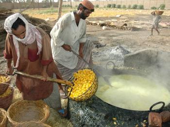 巴基斯坦椰枣初加工