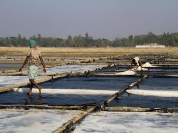 孟加拉制盐