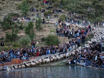 泰芬尼镇的赶羊过河比赛04