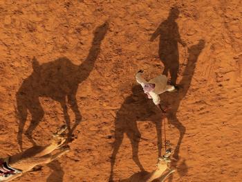 阿联酋动物赛跑10