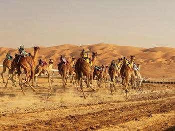 阿联酋动物赛跑11