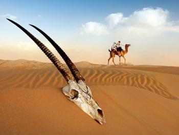 阿联酋动物赛跑14