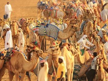阿联酋动物赛跑01