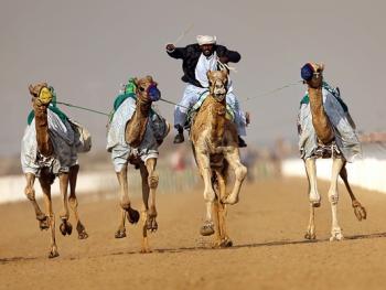 阿联酋动物赛跑02