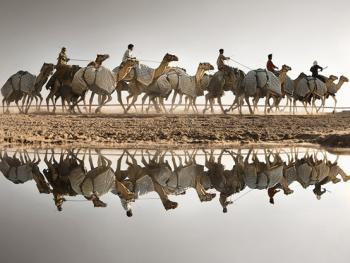 阿联酋动物赛跑03