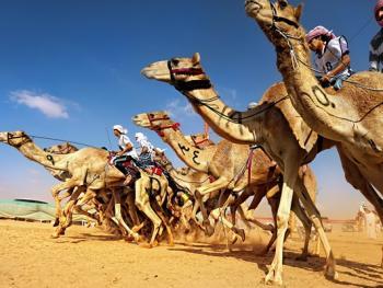 阿联酋动物赛跑04