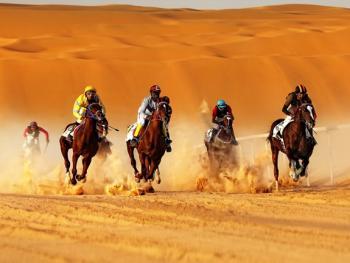 阿联酋动物赛跑05