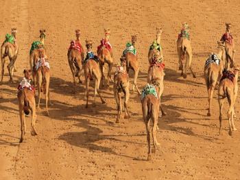 阿联酋动物赛跑08