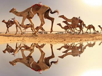 阿联酋动物赛跑