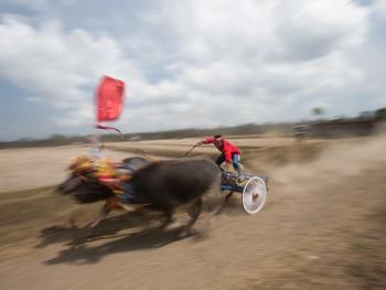 马都拉赛牛盛会