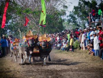 马都拉赛牛盛会06