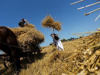 本耶夫奇人的小麦崇拜04
