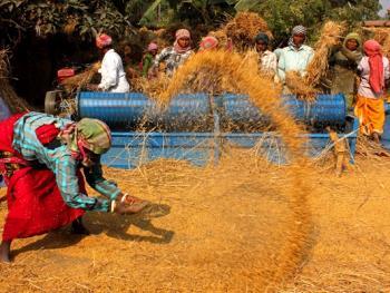 印度乡村妇女的劳作14