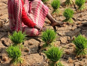 印度乡村妇女的劳作01
