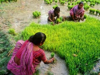 印度乡村妇女的劳作02