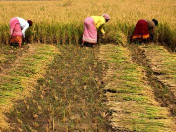 印度乡村妇女的劳作04