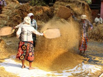 印度乡村妇女的劳作05