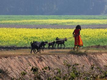 印度乡村妇女的劳作08