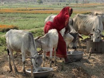 印度乡村妇女的劳作09