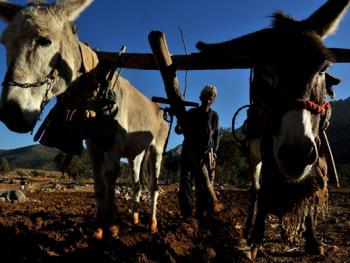 伊朗游牧民族的生活习俗14