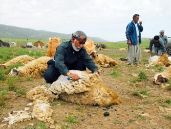 伊朗游牧民族的生活习俗03