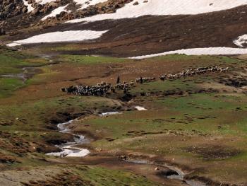 伊朗游牧民族的生活习俗05