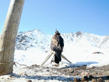 阿勒泰山的哈萨克猎鹰人01