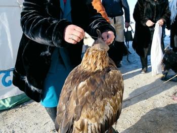 阿勒泰山的哈萨克猎鹰人03