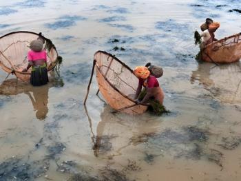 希拉巴提河妇女小网捕鱼