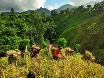 孟加拉部落的刀耕火种10