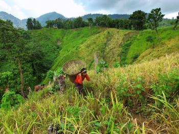 孟加拉部落的刀耕火种12