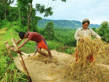 孟加拉部落的刀耕火种13
