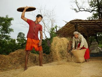 孟加拉部落的刀耕火种14