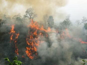 孟加拉部落的刀耕火种03
