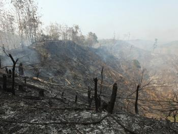 孟加拉部落的刀耕火种04