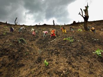 孟加拉部落的刀耕火种05