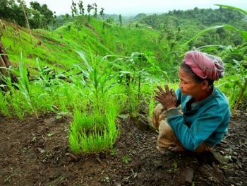 孟加拉部落的刀耕火种06