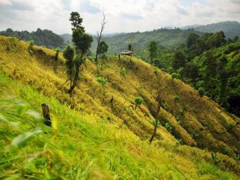 孟加拉部落的刀耕火种09