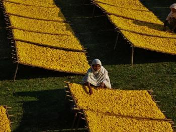 印度手工丝织业3