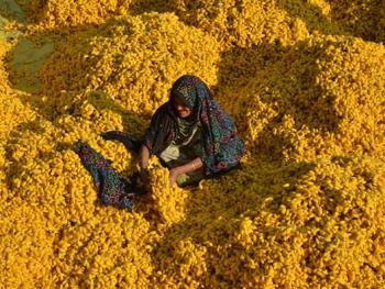 印度手工丝织业4