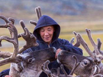 饲养驯鹿14