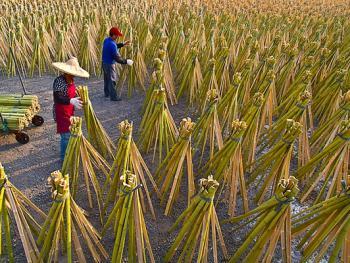 台湾的传统产业07